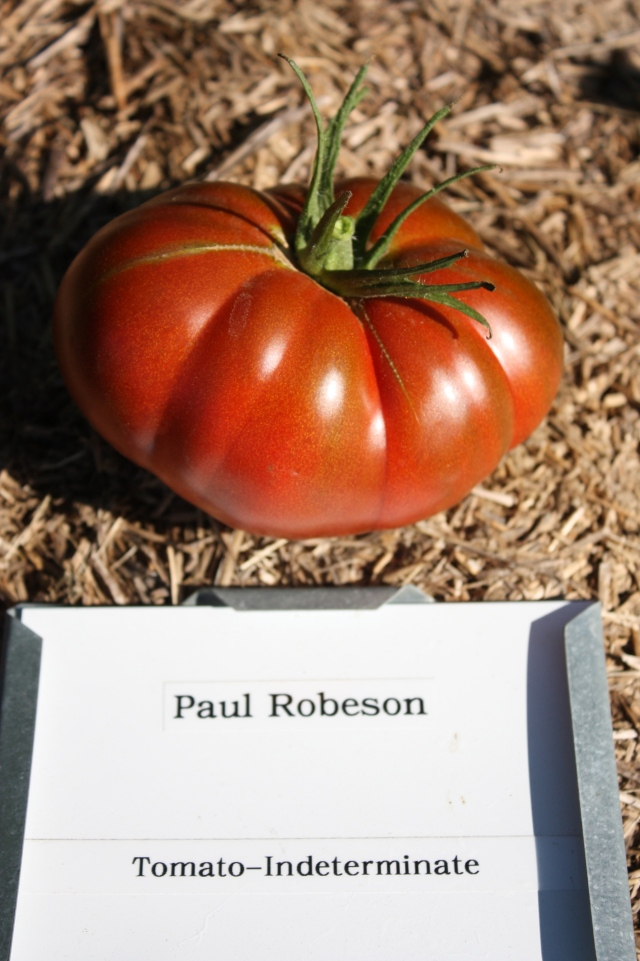 Top tomato for taste in 2013.